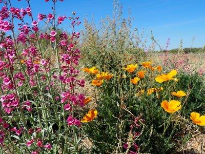 california..ing_pinkish.jpg