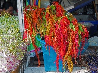 chiang_mai_flower_stall_2.jpg