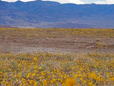 desert_gol..th_valley_2.jpg