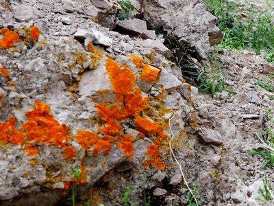 orange_lic..eath_valley.jpg