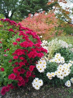 palace_flowers.jpg