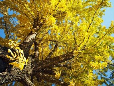traditional_korean_tree.jpg