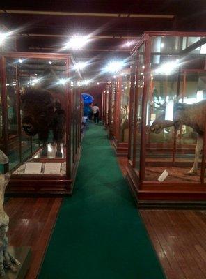 wa_museum_dead_zoo.jpg