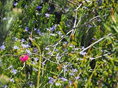 wildflower_7.jpg