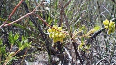 wildflower_8.jpg