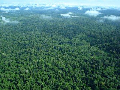 Rain Forest Sumatra
