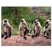 monkey4.jpg