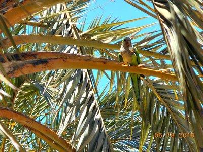 Bar_joanmiro_park_parrot2.jpg