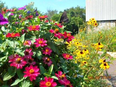 Flowers_butterfly.jpg