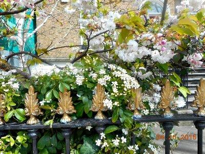 Merrion_Rd_gate_blossoms.jpg