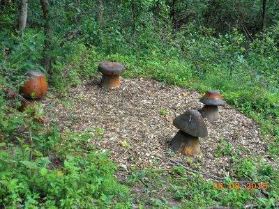 Pitts_bot_..ushroomcaps.jpg