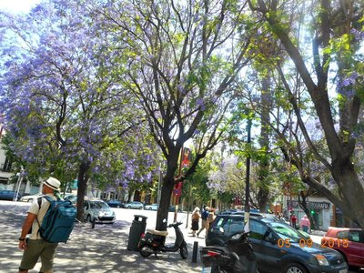 Sevilla_purpletrees_g.jpg
