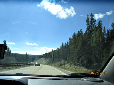 bighorn trees2