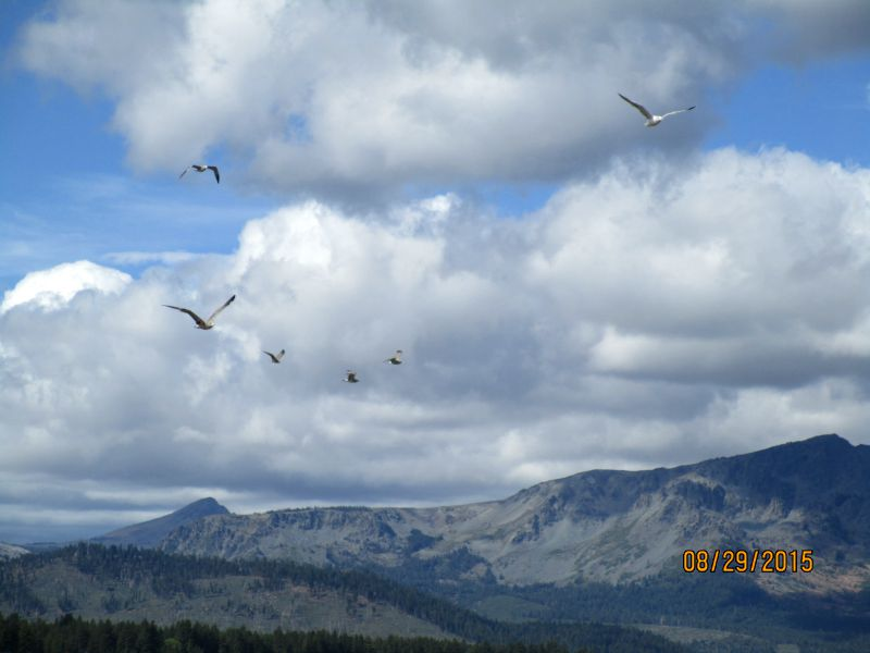 large_Tahoe_birds.jpg