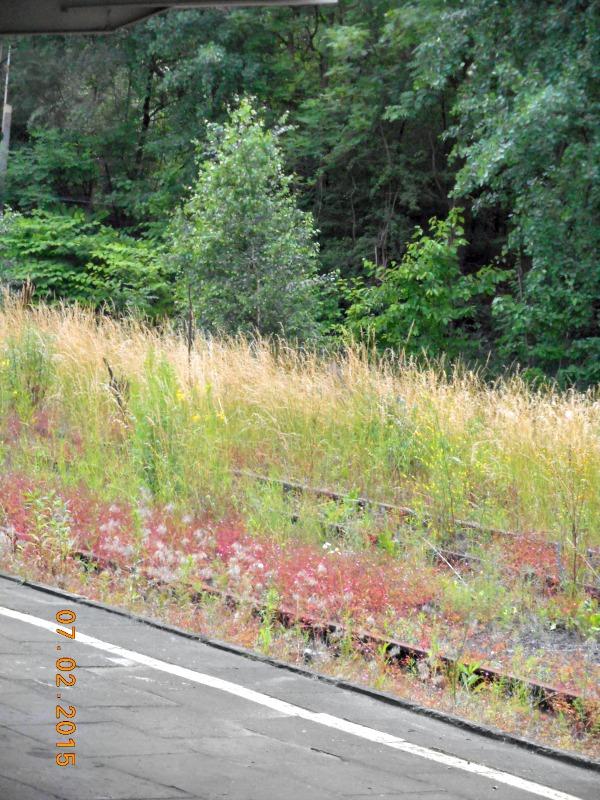 large_train_to_auschwitz.jpg
