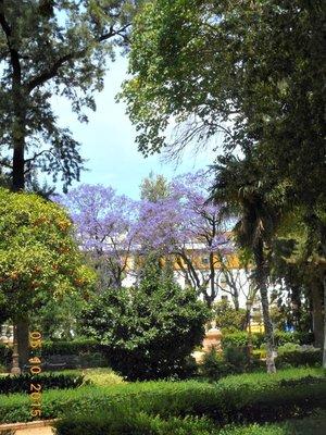 sevilla_trees.jpg