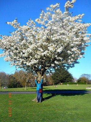 white_blossoms_a.jpg