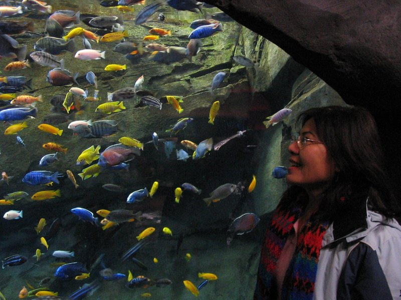 Mom and fishies
