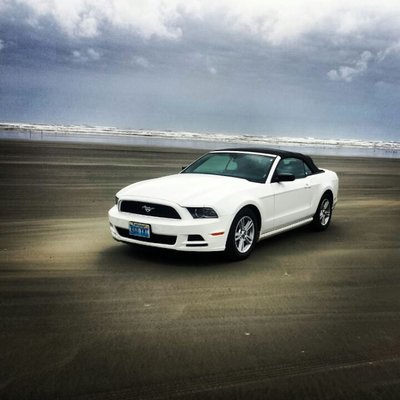 Mustang on the beach