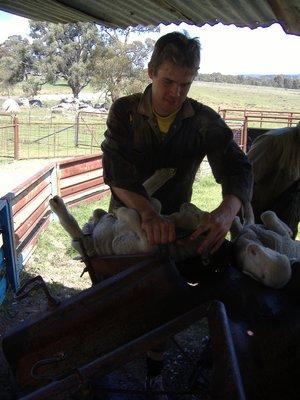 lambmarking