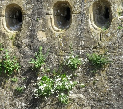 Flowers growing out of the walls