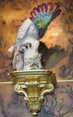 Kakadu or cockatoo
