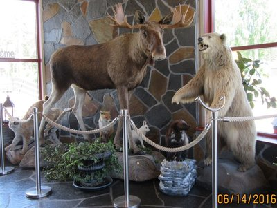 Wild life display at restaurant