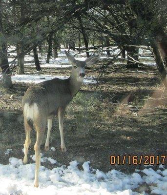 IMG_2830 - Deer having lunch