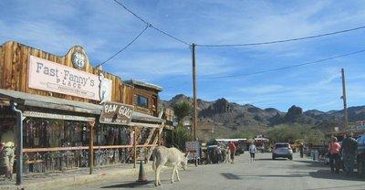 Oatman, AZ donkeys on the street