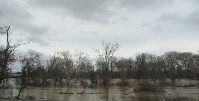 Flooded Sacramento River