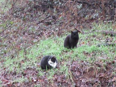Feral Cats at Sundial Bridge