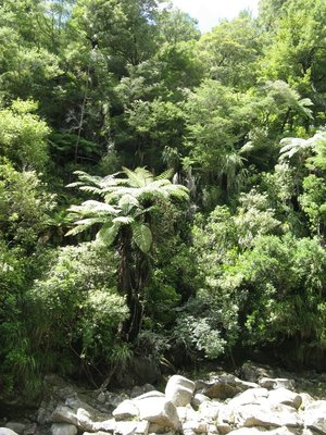 Forest by Wainui Falls