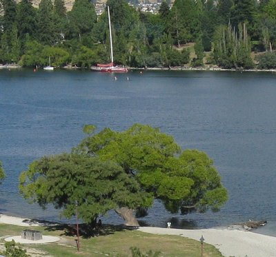 View of tree, child and sailboat on Lake Wakatipu