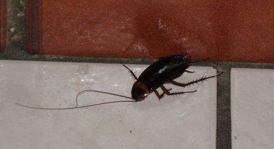 Cockroach - mort, mort, mort