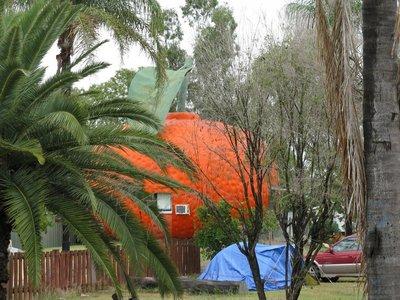 Giant Mandarin