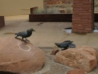 IMG_2709 Ravens