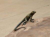 IMG_2710 Sculptured lizard