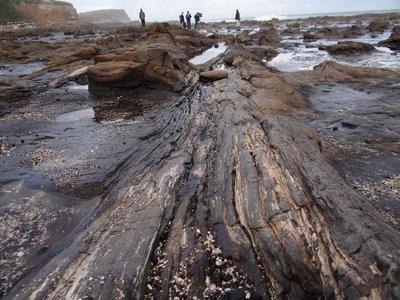 Fossil Tree at Curio Bay