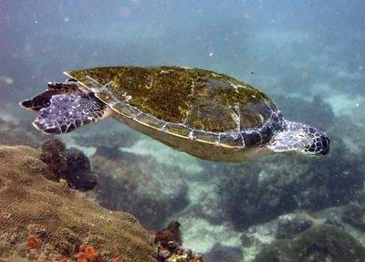 Tortoise by Lindsay