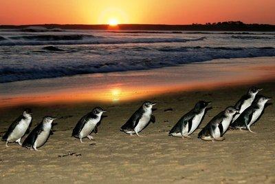 Phillip_Is..e_at_Sunset.jpg
