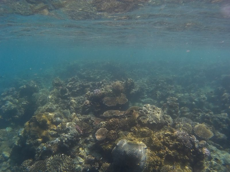 Snorkeling around the Whitsundays