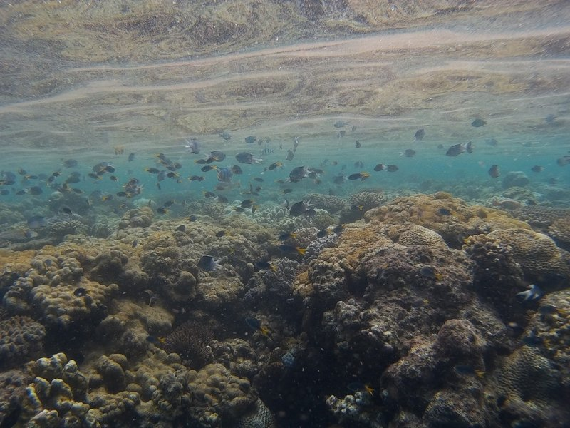 Heaps of Fish and Corals