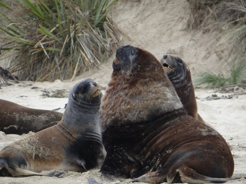 Male and Female Sea Lions