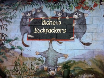 Bicheno_Backpackers.jpg