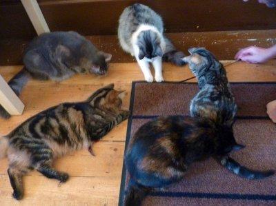 Cats_playing.jpg