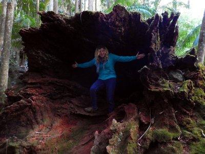 Charlotte big tree