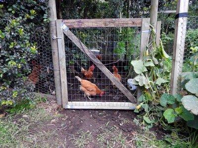 Chicken Gate