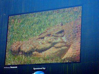 Crocodile_Show3.jpg