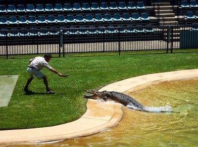 Crocodile_Show4.jpg