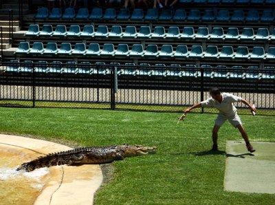 Crocodile_Show9.jpg